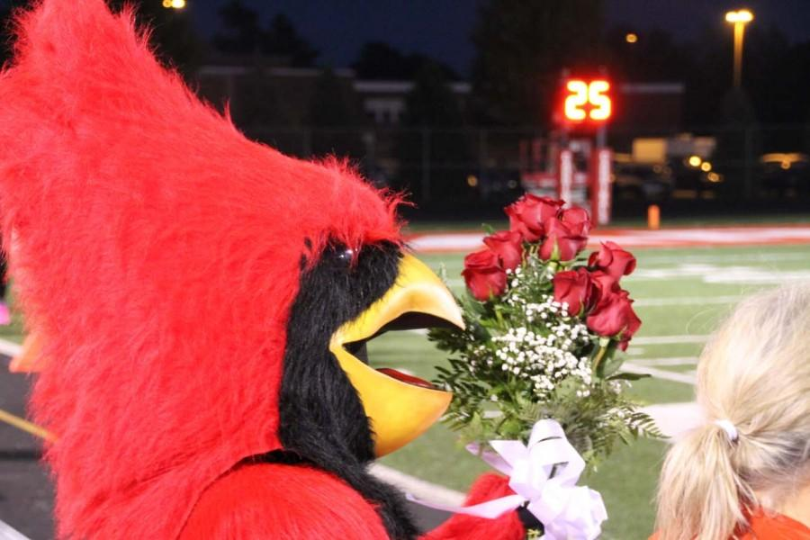 The+cardinal+stands+on+the+sidelines+waiting+with+roses+for+the+homecoming+Queen+winner.+The+Queen+was+Sarah+Fowerbaugh+%E2%80%9815.