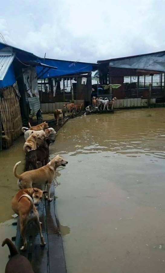 Dogs seek refuge atop wooden walk ways as they look out at their floating home in Myanmar.