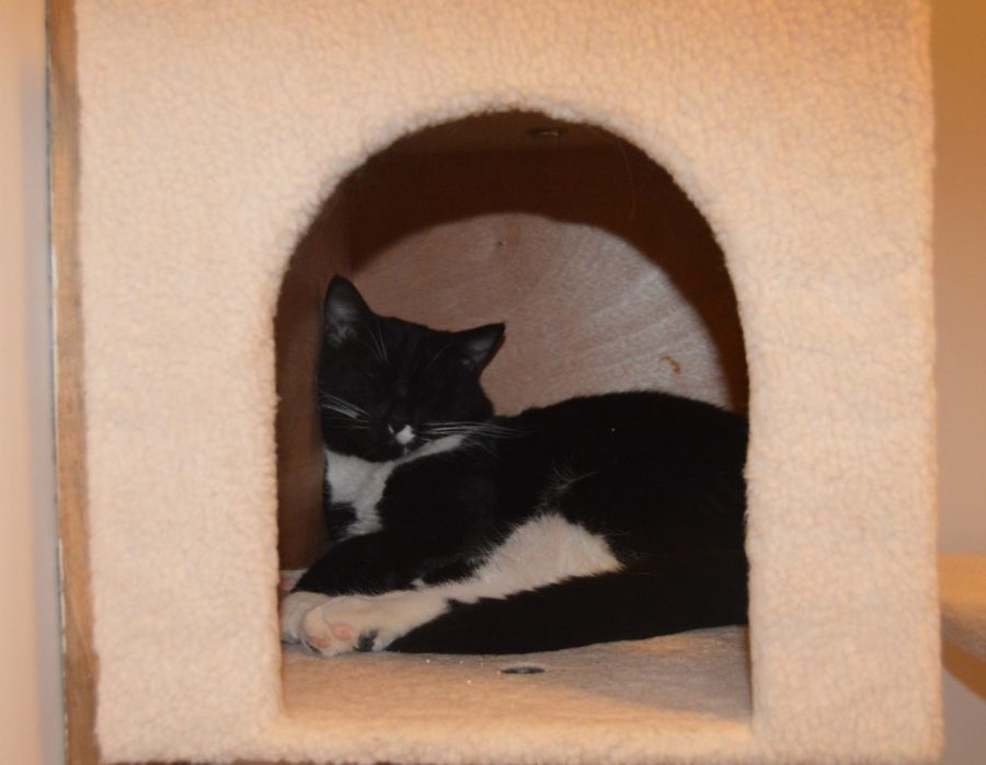 Nine Lives Cafe: cats and coffee