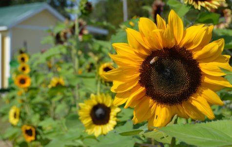 Indy Treasures: P&D Flower Farm