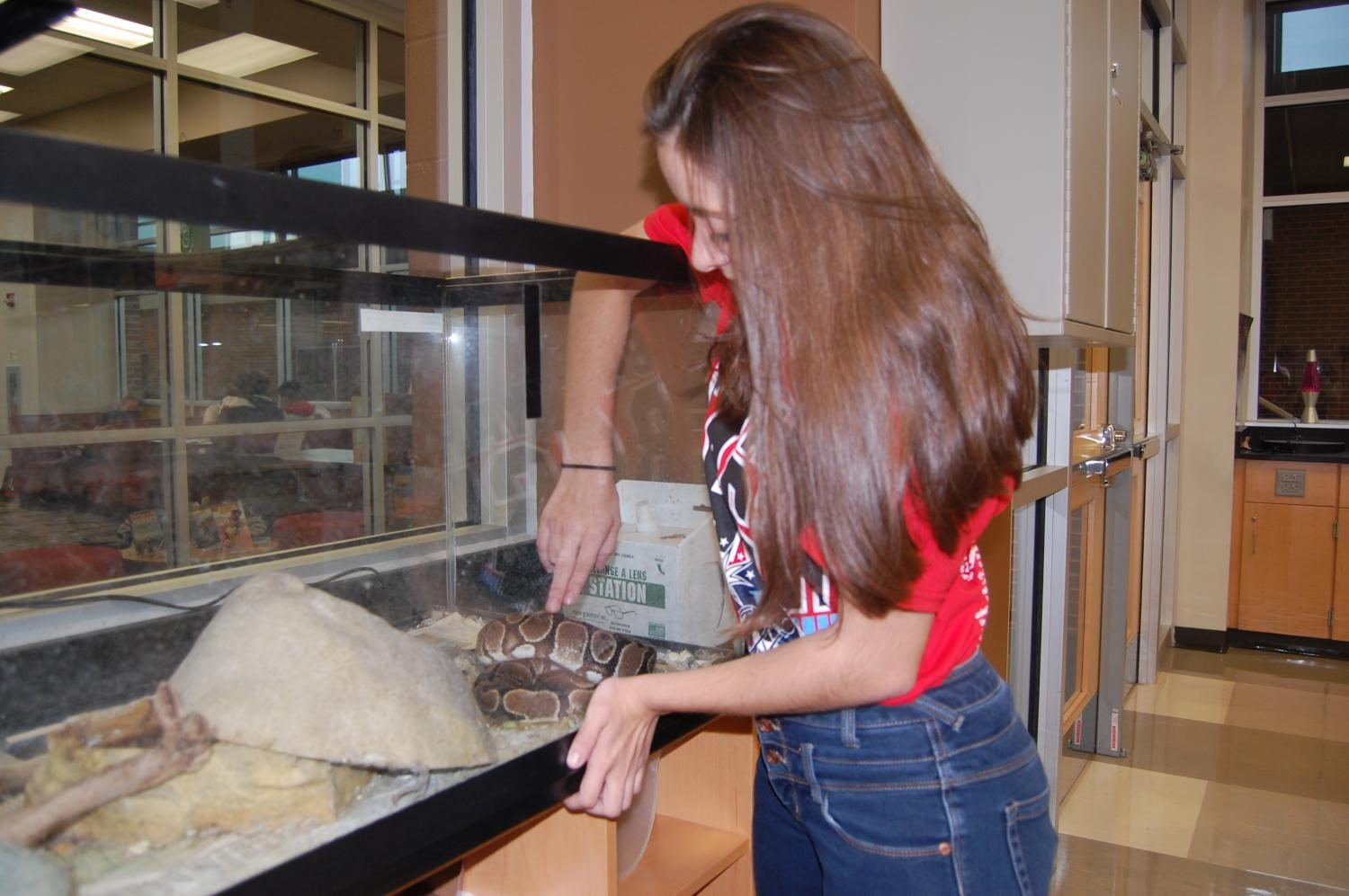 Junior Maria Guia pets the snake in the biology lab.