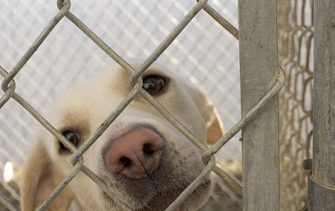Potential pet owners: Adopt don't shop