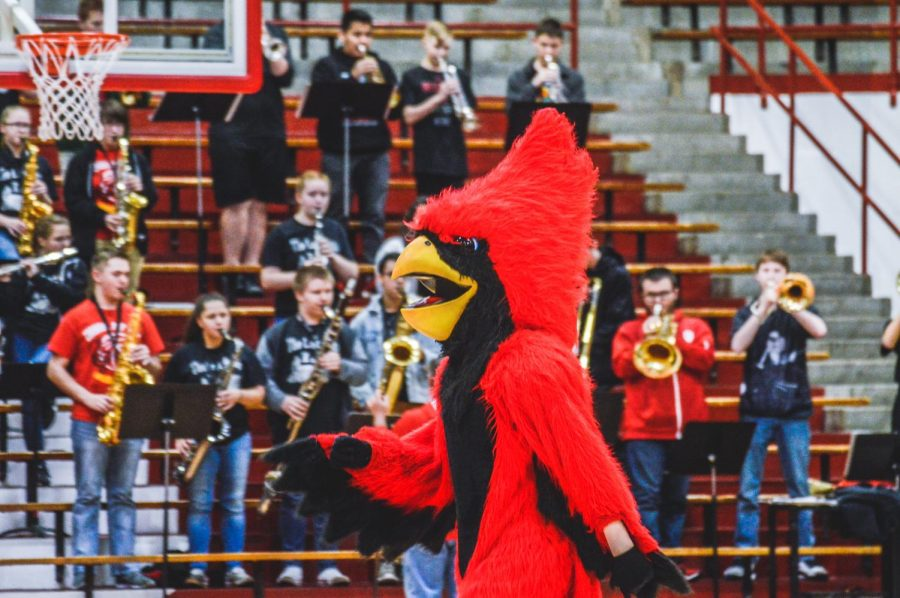 The cardinal walks across the basketball court at the beginning of the spring pep session.