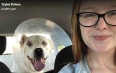 SHS teacher rescues stray dog