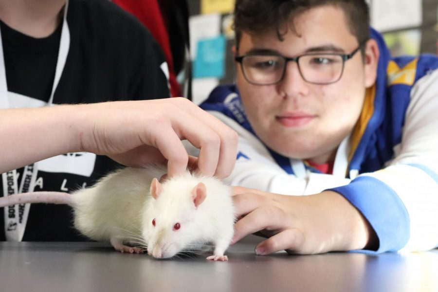 Junior Brayden Wilson pets Rocky during the class' makeup work time in environmental science on Aug. 8. Rocky is the class pet and was named after the unit, rocks, when the class got him. Shortly after the photo was taken Rocky peed all over the table.