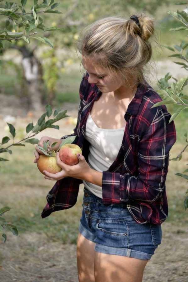 Sophomore Audrey Heaton picks apples at Anderson Orchard.