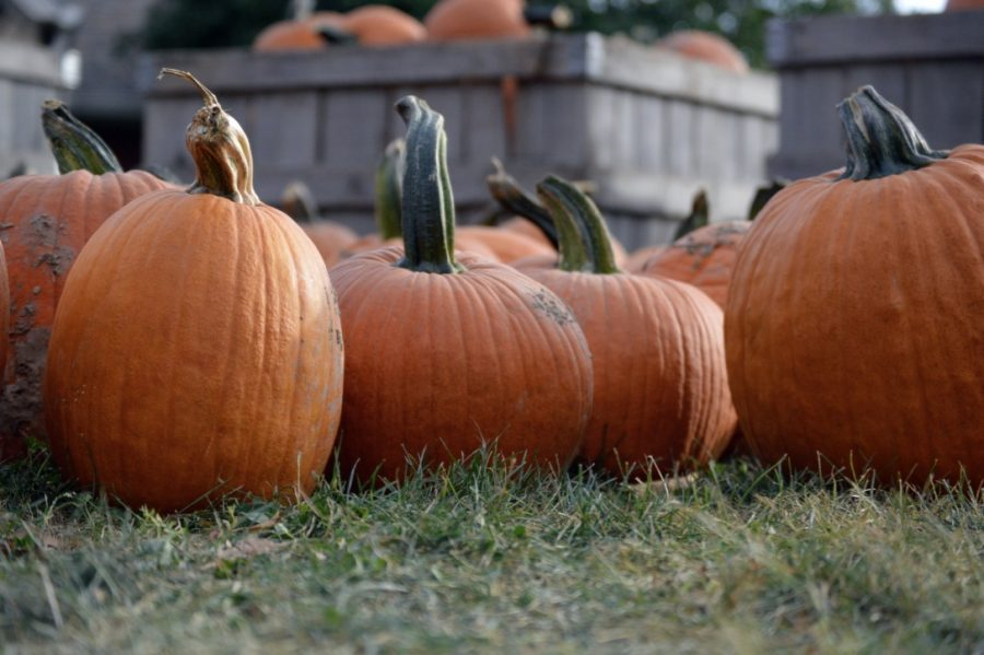 Anderson Orchard features pumpkins, apples and many fall activities.